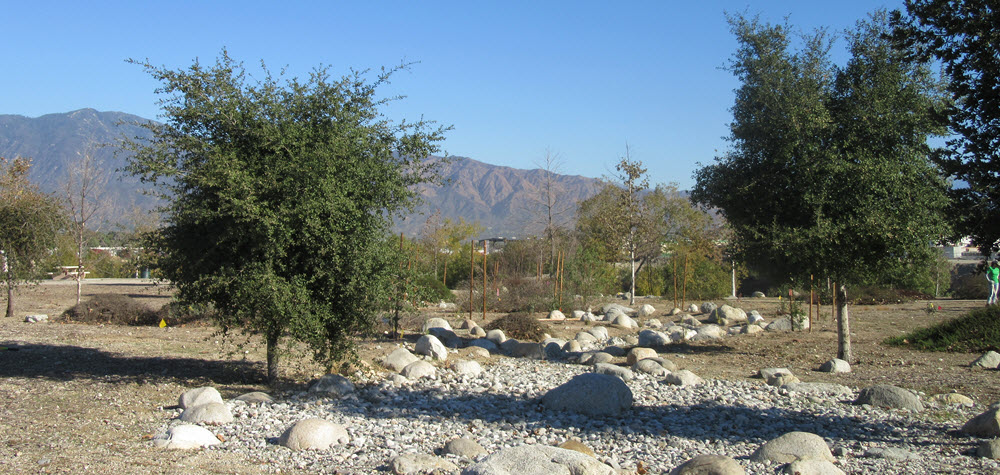 Peck Water Conservation Park Bioswale in Arcadia CA