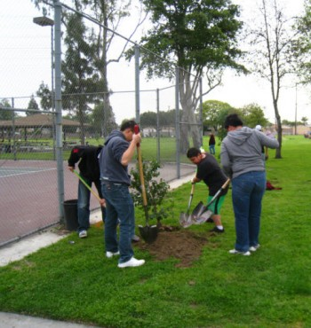 Amigos de los Rio volunteer planting trees for a greening event