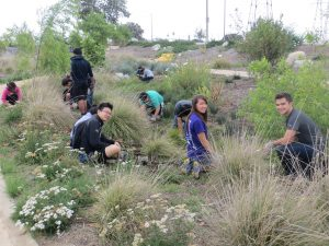 Volunteer Weeding Event