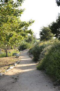 Lashbrook Park trail
