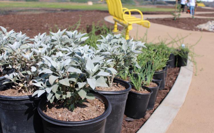 Plants for Circle Park