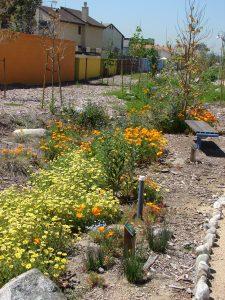 Lashbrook Park Bioswale and wall