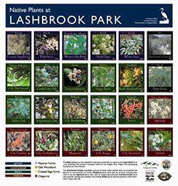 Lashbrook Park Plant Palette Signage