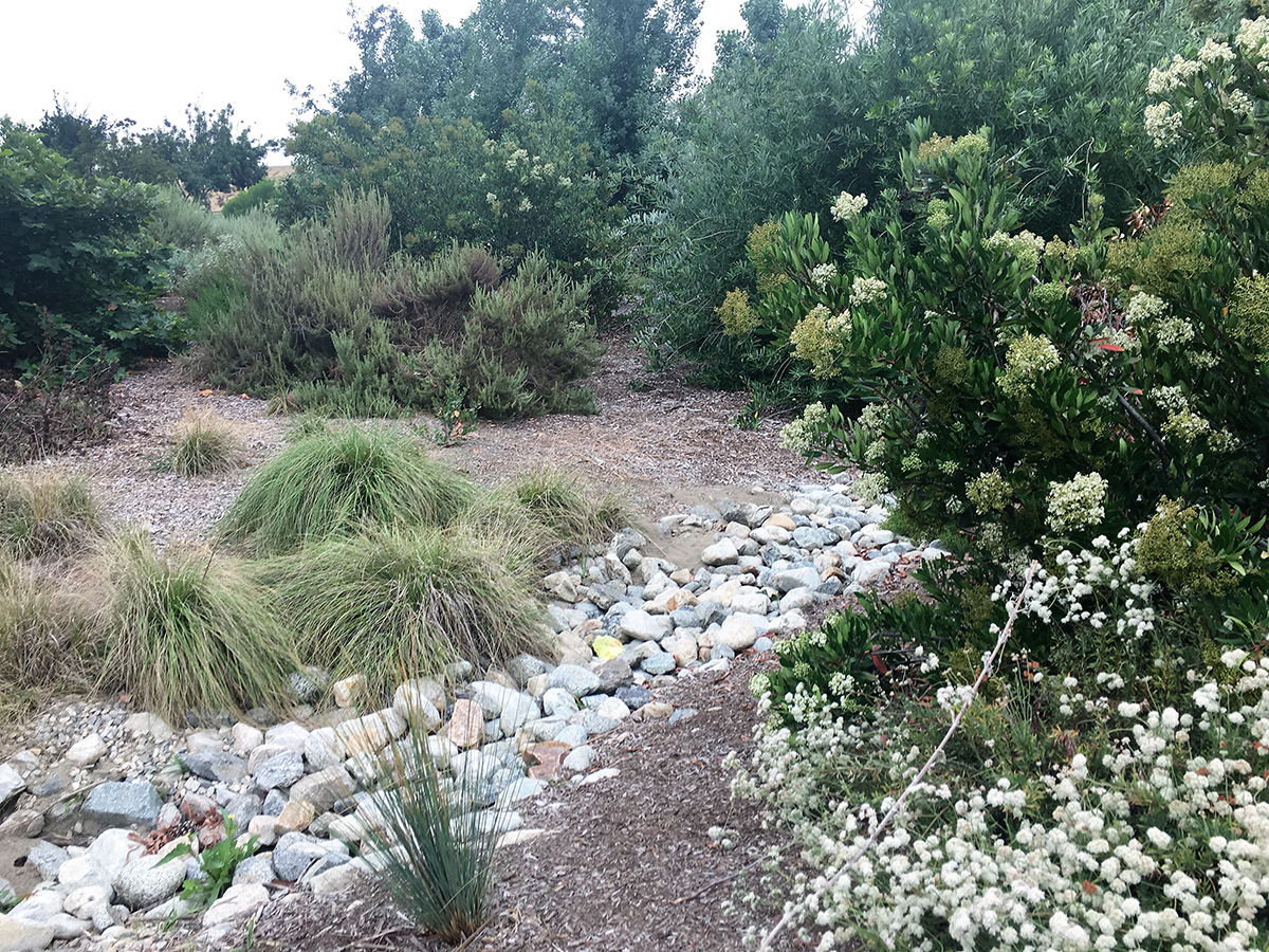 Hollydale Park bioswale