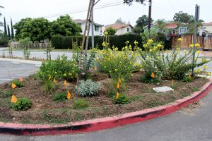 Jeff Seymour Family Center parking area planter