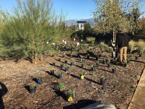 e plants planted by AMIGOS Volunteers