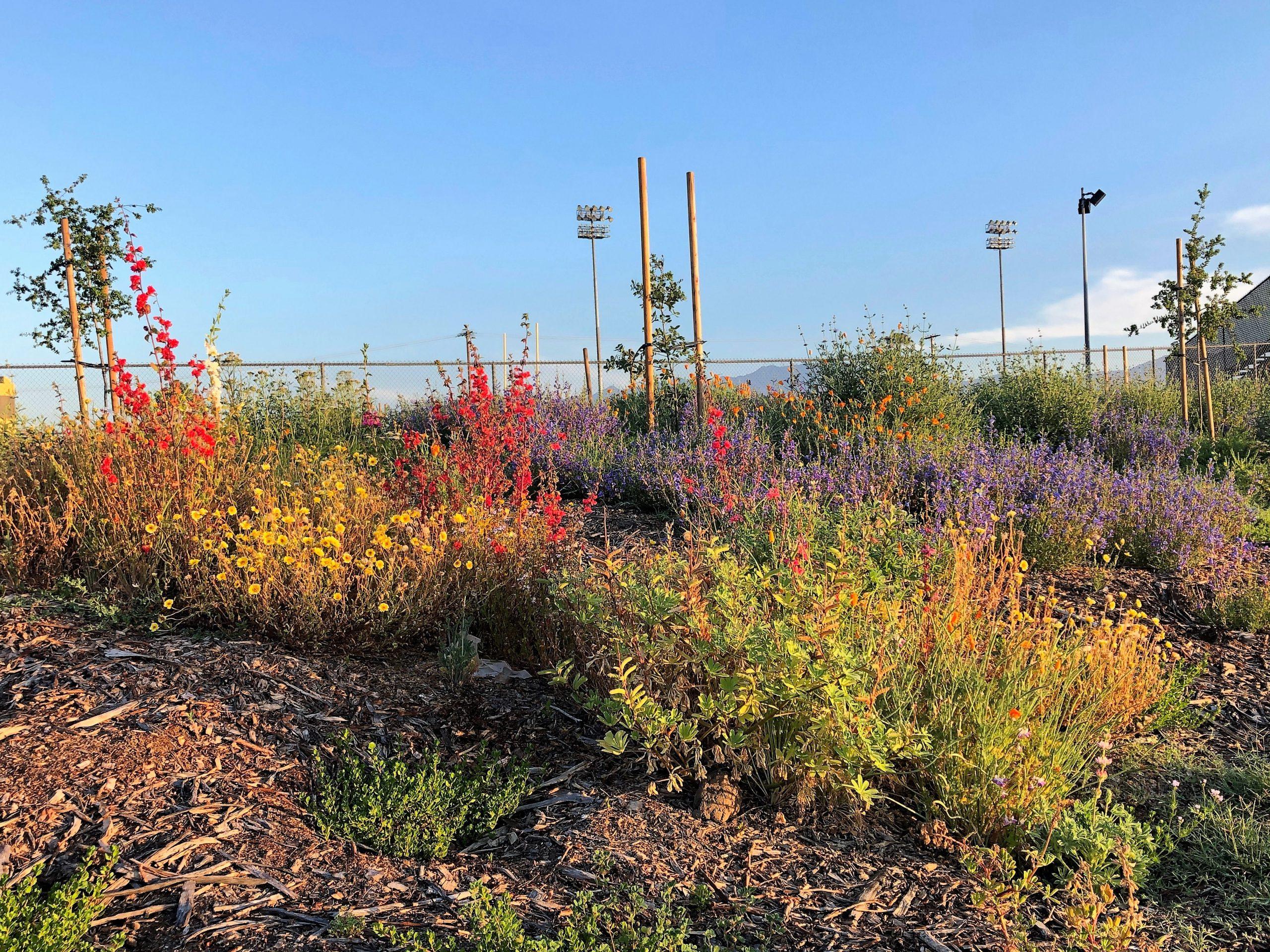 Bassett High School Native Plants