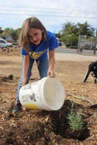 Bassett-High-School-young-volunteer-planting
