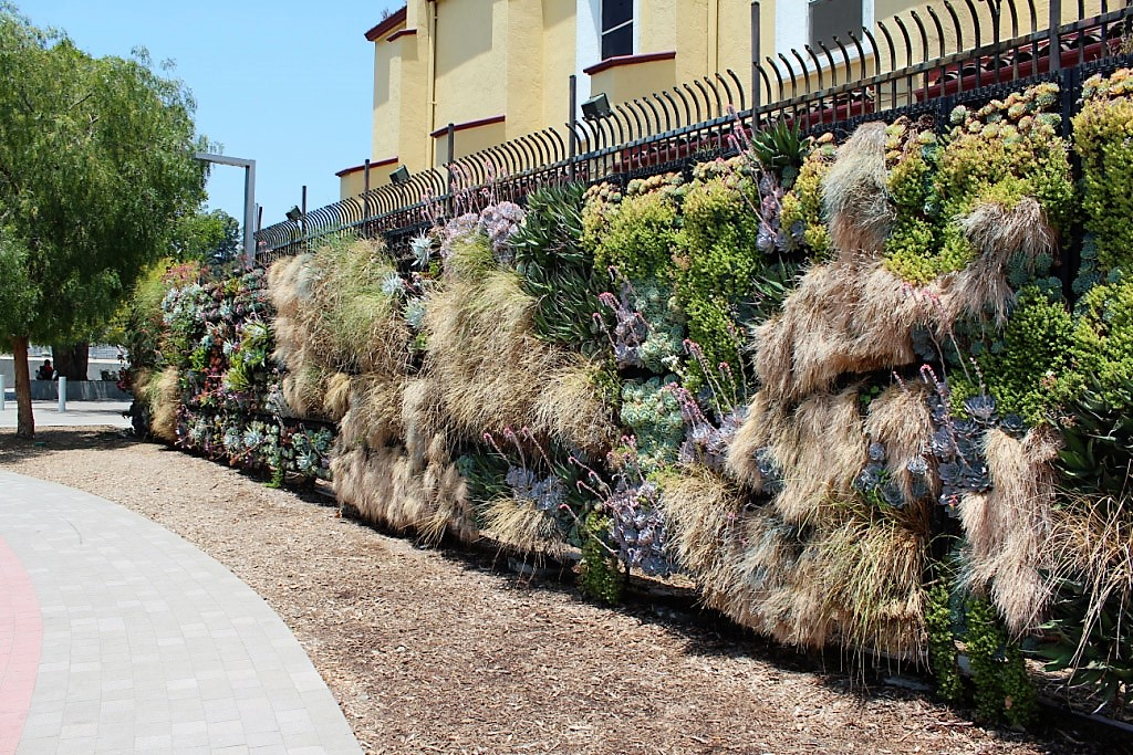 Living-Plant-Wall